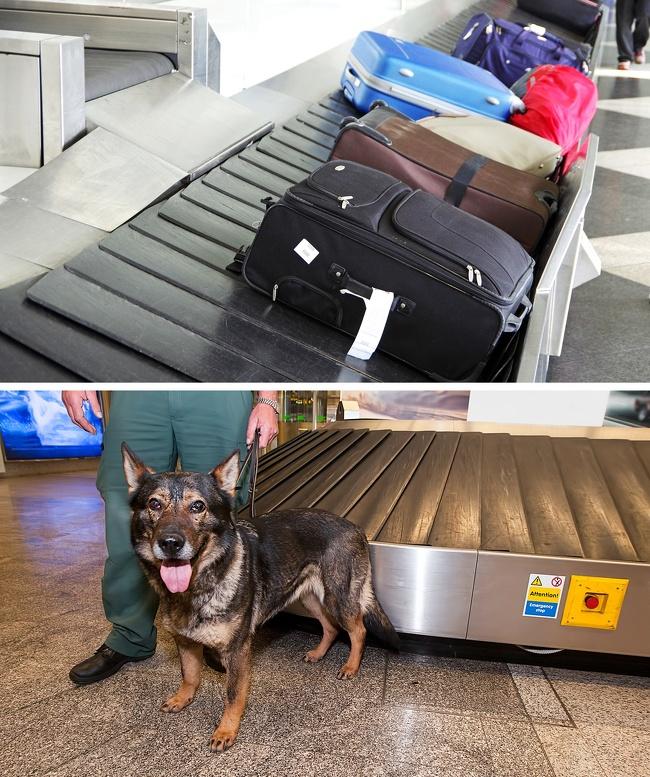 8 raisons pour lesquelles le personnel de l'aéroport en sait beaucoup plus sur nous que nous le pensons