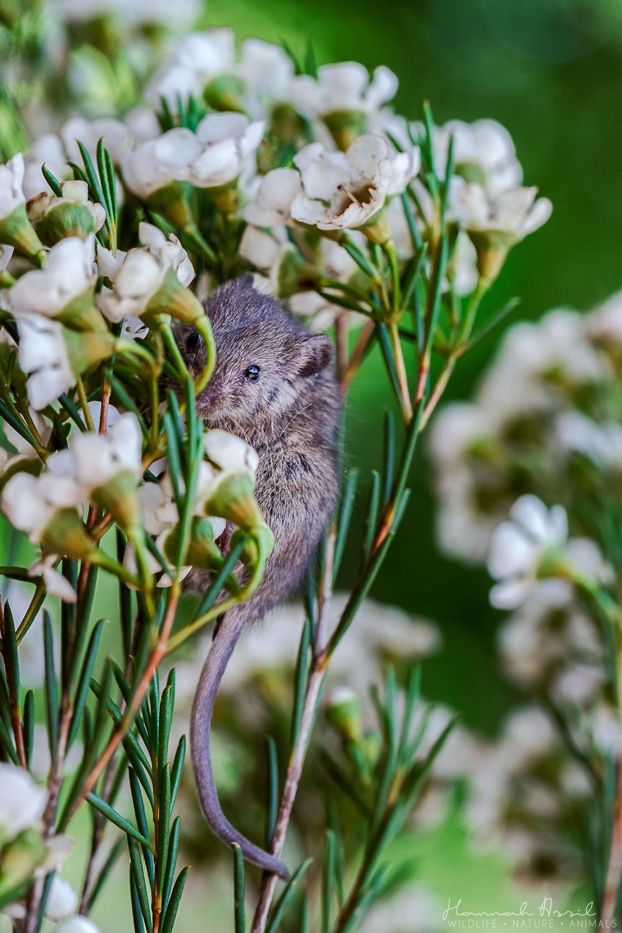 Je photographie la vie d'une petite souris sauvée de la bouche d'un chat (22 images)