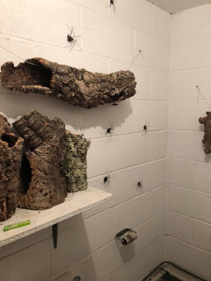 Quelqu'un a conçu des toilettes pour héberger des araignées géantes et c'est le pire cauchemar de tout arachnophobe
