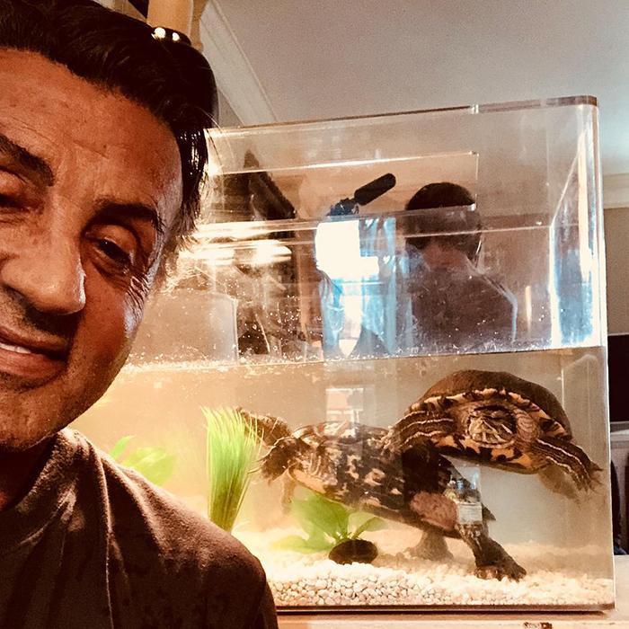 Les deux tortues qui ont été présentées dans «Rocky» sont toujours vivantes et voici Stallone avec elles 45 ans plus tard