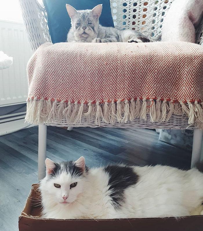 Un chat atteint du syndrome d'Ehlers-Danlos a enfin trouvé une maison et ses humains s'assurent qu'il mène une vie heureuse