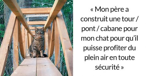 Les patios pour chats, connus sous le nom de «chatios», sont la nouvelle façon de gâter votre chat bien-aimé (22 images)