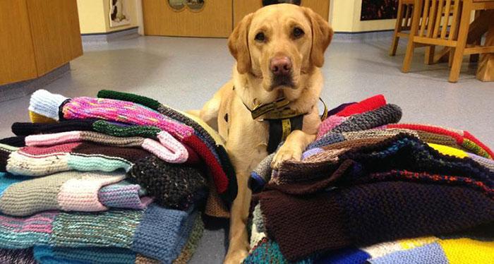 Cette femme de 89 ans a tricoté 450 couvertures pour les chiens de refuge et c'est adorable