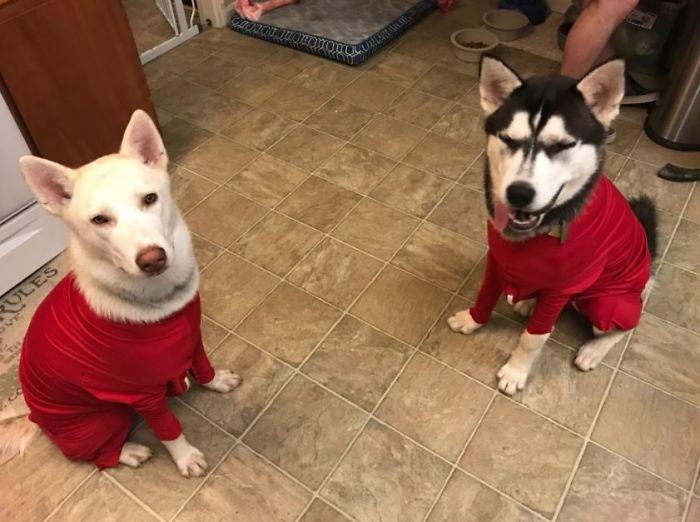 Amazon vend des grenouillères pour chiens qui protègent votre maison de la perte de poils et aident à réduire leur anxiété