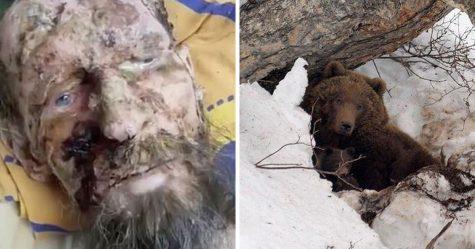 Un homme pris pour une momie a été sauvé de la tanière d'un ours après un mois