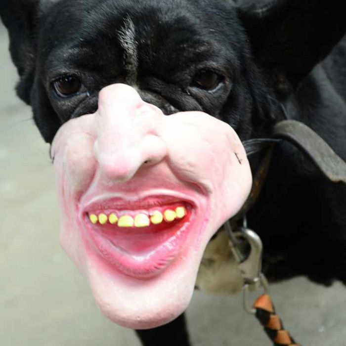 Amazon vend des muselières pour chiens qui ressemblent à des visages humains et elles sont trop bizarres