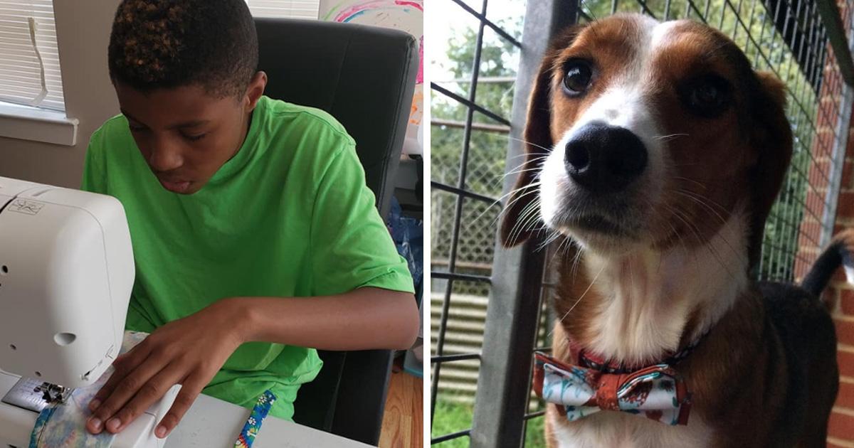 Cet enfant de 12 ans fabrique des noeuds papillon élégants pour aider des chiens et chats de refuge à se trouver une maison