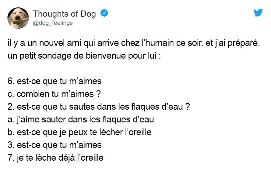 22 pensées de chien les plus drôles que seuls les propriétaires de chiens vont comprendre