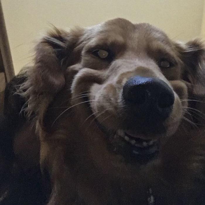 Des gens partagent les photos les moins flatteuses de leurs animaux de compagnie et c'est hilarant (22 images)