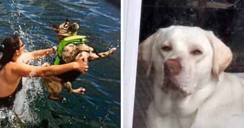 On a demandé aux gens de partager les photos les plus laides de leurs animaux de compagnie et c'est hilarant (33 images)