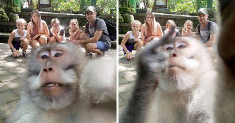 Ce singe a posé pour un selfie avec une famille puis leur a fait un doigt d'honneur