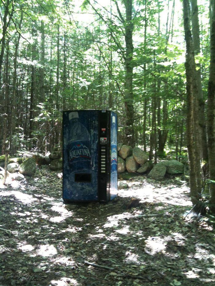 25 fois où des gens ont trouvé quelque chose de bizarre dans la forêt et n'ont pas pu s'empêcher de le partager