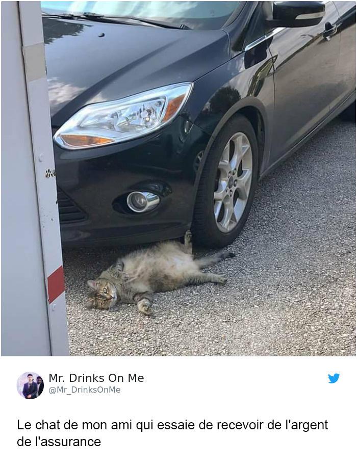 25 tweets de chats les plus drôles de tous les temps