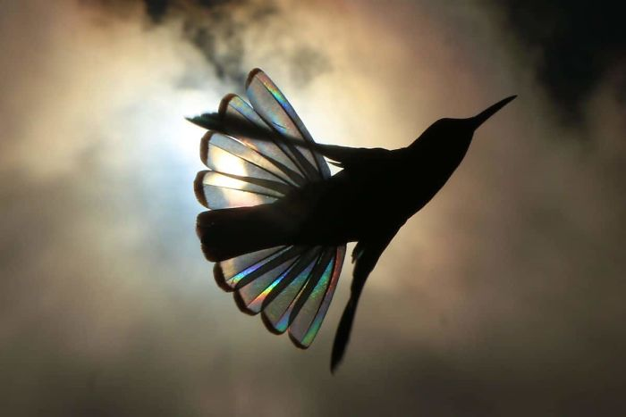 9 photos féeriques d'ailes de colibris brillantes comme un arc-en-ciel
