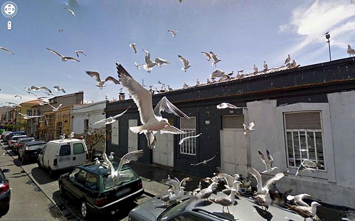 25 meilleures photos d'animaux prises accidentellement par Google Street View