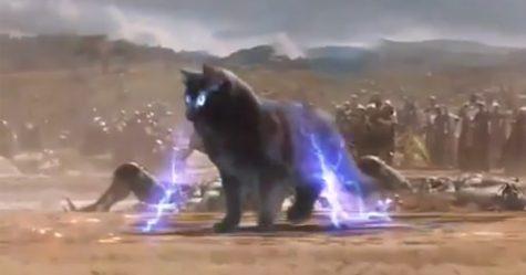 Ce gars améliore les films de Hollywood en y insérant son chat et le résultat est trop drôle