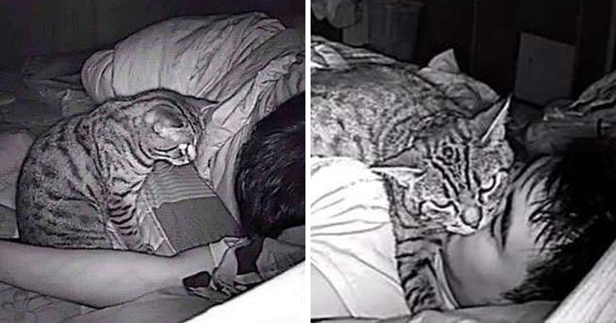 Ce gars a installé une caméra pour surveiller son chat et il a découvert que son minou l'étouffe la nuit