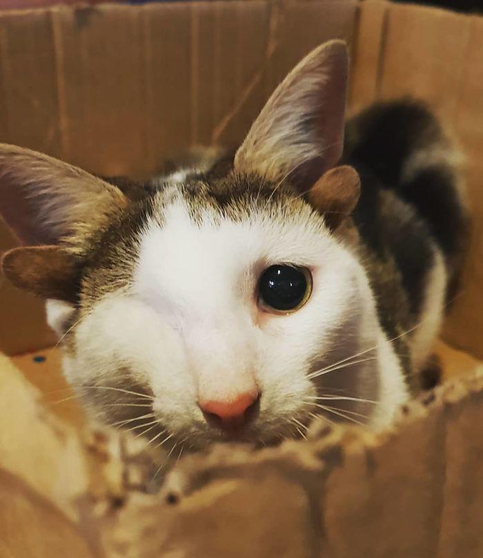 Ce chaton de refuge avec 4 oreilles et un oeil a échappé à la misère après avoir trouvé une maison