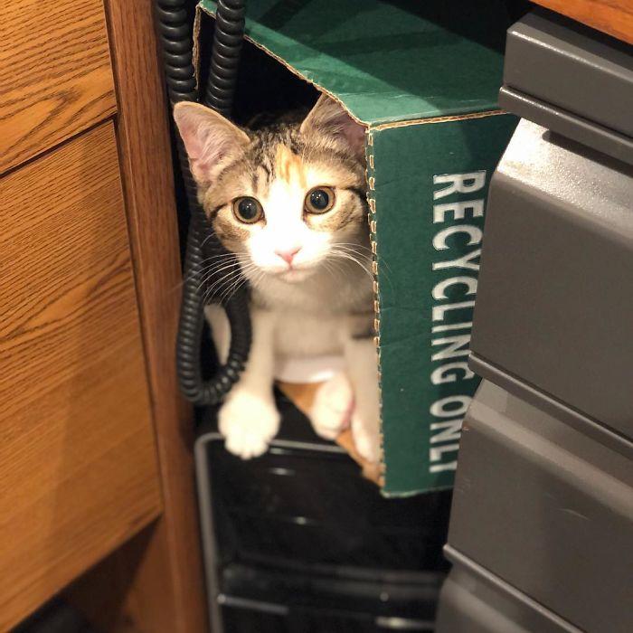 Cette compagnie a adopté 2 chatons de bureau, Débit et Crédit, pour stimuler le moral des employés, et elle a parfaitement réussi (21 images)