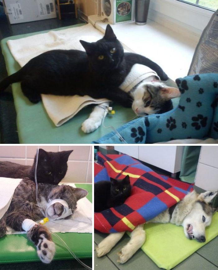 Des gens publient des photos de chats qui travaillent (25 images)