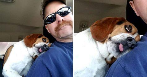 Cet homme a sauvé un beagle de l'euthanasie dans un refuge et le chien a fait un câlin à son sauveur pour le remercier