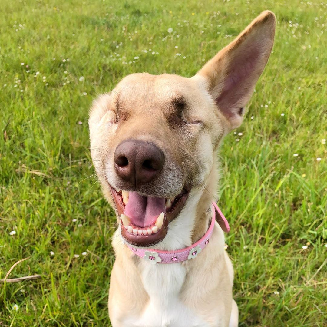 Cette chienne enceinte qui s'est fait tirer dessus 17 fois et a été abandonnée dans la rue est devenue une chienne de thérapie