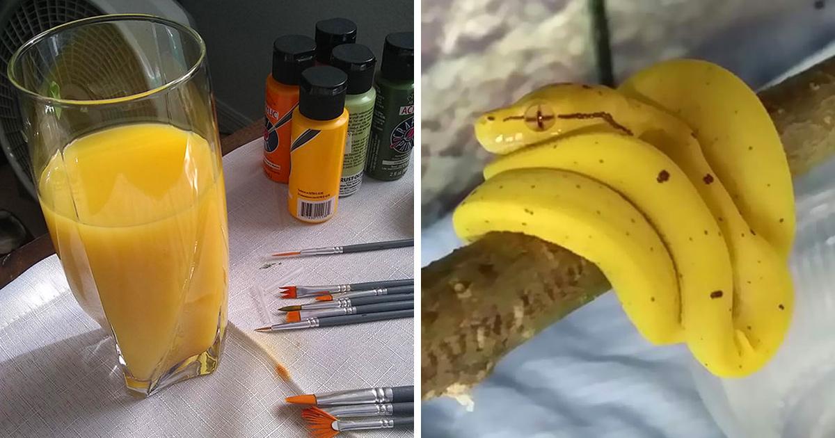 22 fois où des choses non comestibles ressemblaient à de la nourriture délicieuse (nouvelles images)