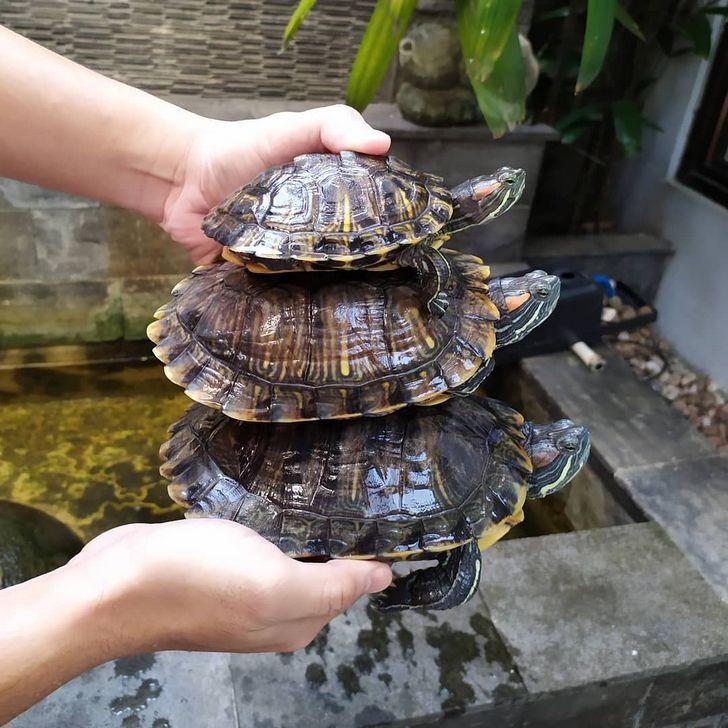 24 faits fascinants sur les animaux qu'on aurait dû apprendre en biologie