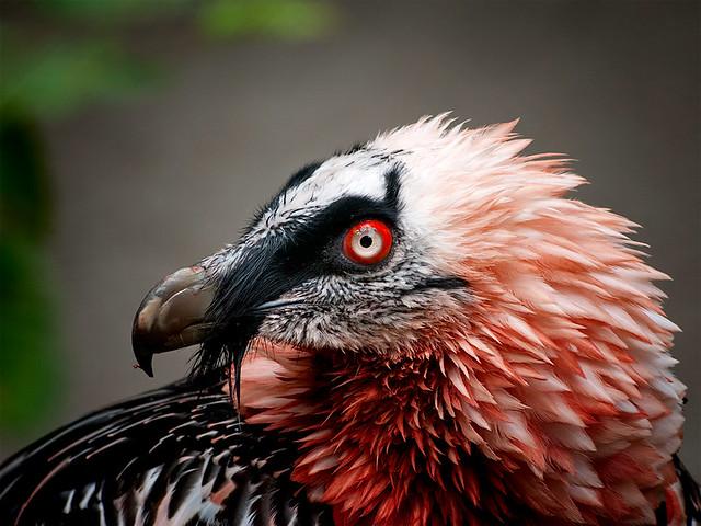 16 faits étonnants sur les animaux que même ton professeur de biologie ne sait probablement pas