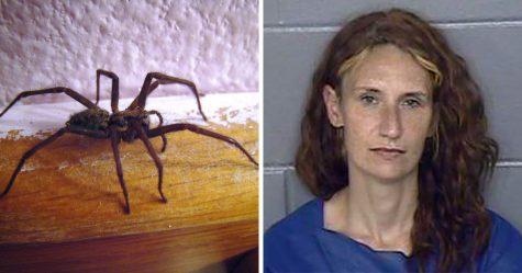 Cette femme a mis le feu à sa maison après avoir trouvé une grosse araignée