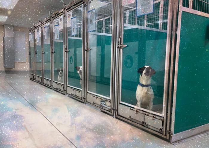 Ce refuge pour animaux demande aux gens de les envahir au lieu de la zone 51