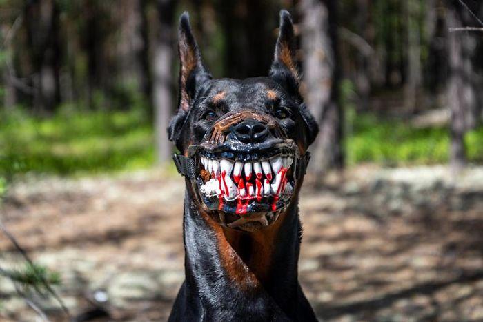 Des gens partagent des photos de leur chien avec cette muselière effrayante d'Amazon