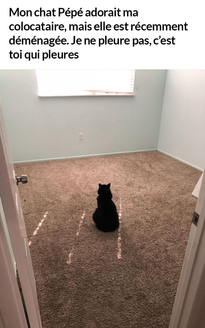 22 photos de chats avec des messages sympas qui vont égayer ta journée