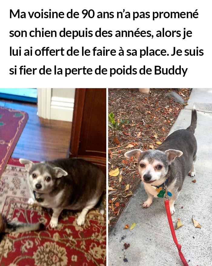 23 photos de chiens avec des messages sympas qui vont égayer ta journée (nouvelles images)