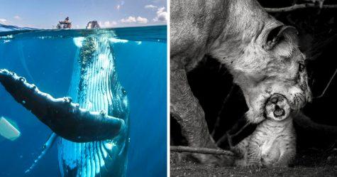 24 clichés émouvants de National Geographic qui semblent suspendre le passage du temps
