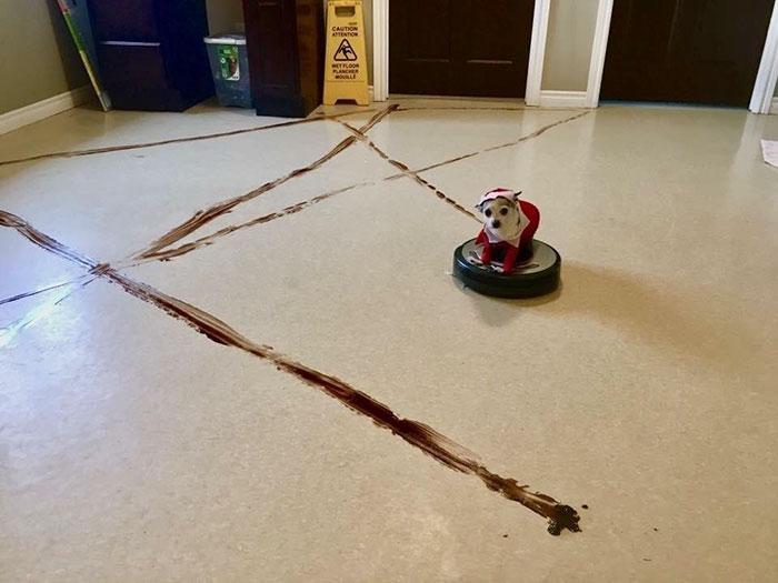 Le Roomba d'un homme a roulé dans du caca de chien et a sali toute sa maison