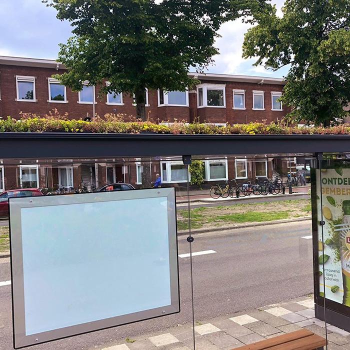 Les Pays-Bas ont transformé 316 arrêts de bus en arrêts pour les abeilles