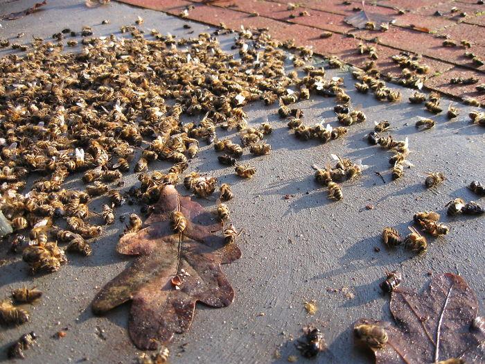 500 millions d'abeilles sont mortes en trois mois au Brésil et l'avenir de notre alimentation est remis en question
