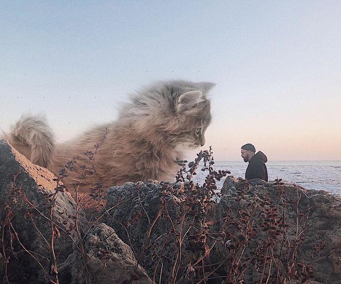 33 images qui montrent à quoi ressemblerait la Terre si les chats étaient énormes