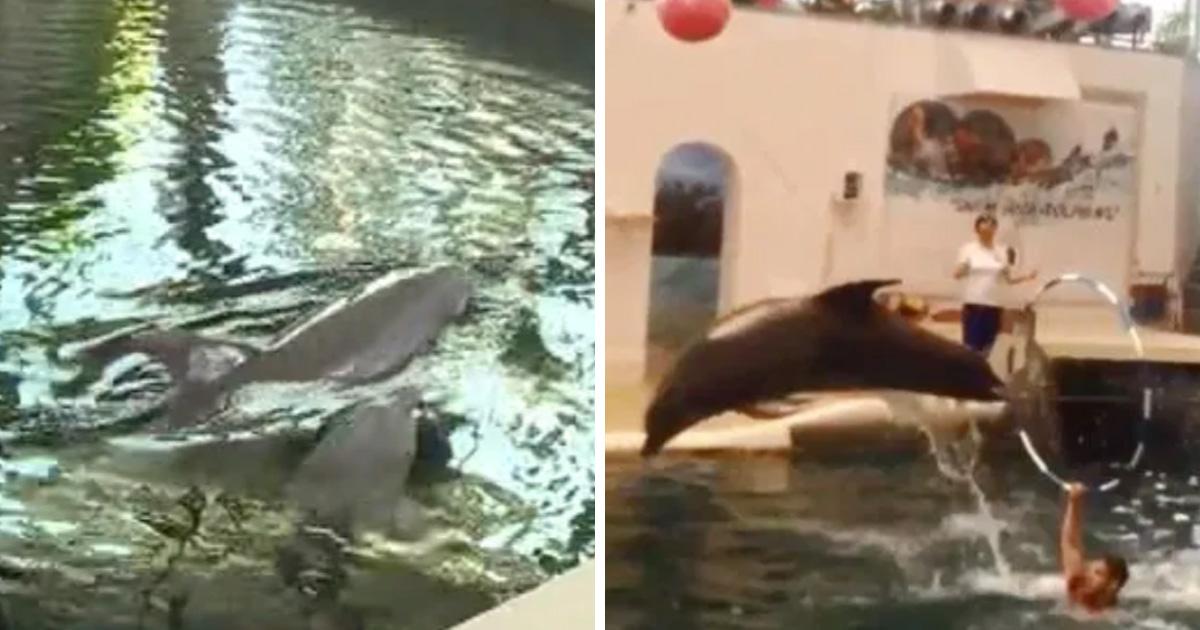 Un bébé dauphin est mort pendant sa performance dans un parc aquatique après avoir été surmené
