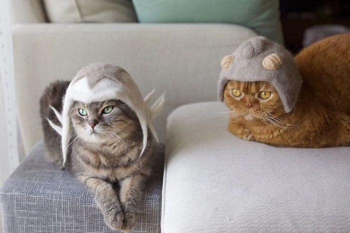 Ces chats ont une énorme collection de chapeaux fabriqués à partir de leurs poils perdus (33 images)