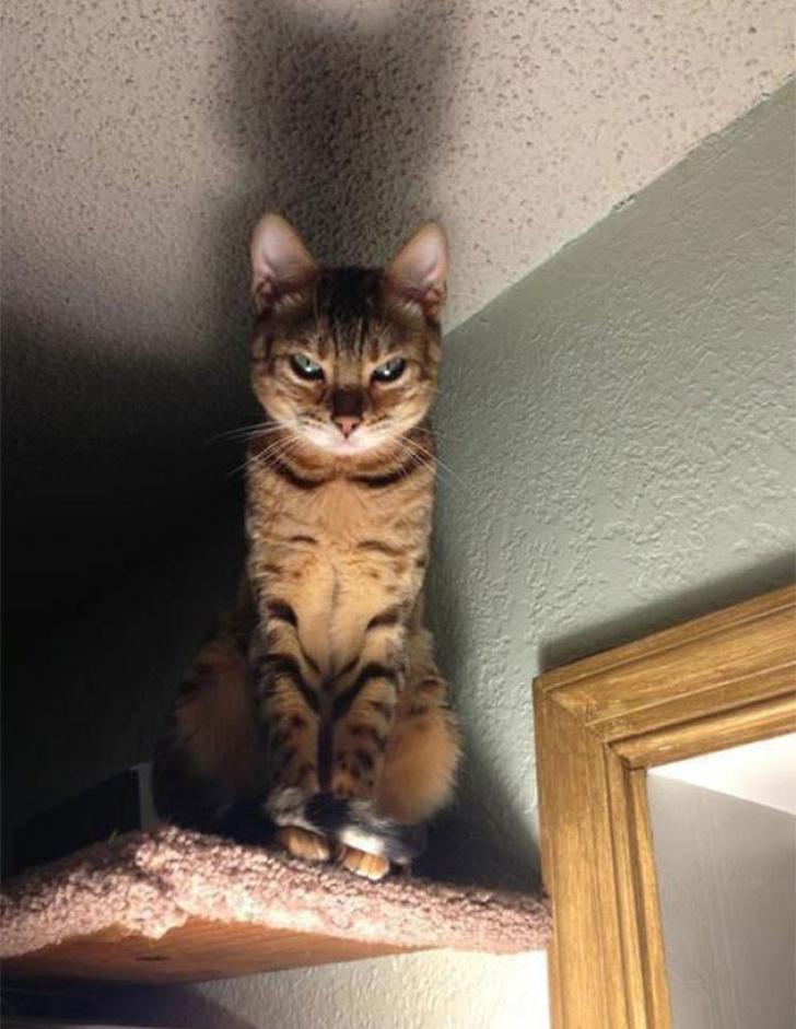 20 chats qui ont l'air si fâchés que vous ne voudrez pas les déranger