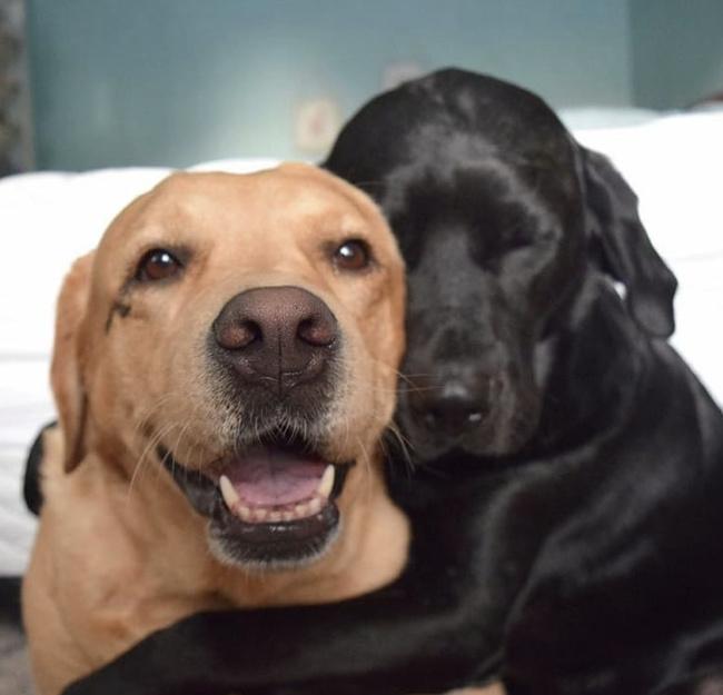 26 images qui prouvent que deux animaux de compagnie sont mieux qu'un seul