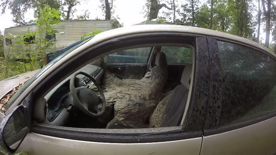 Ce gars a trouvé un énorme nid de guêpes à l'intérieur d'une voiture abandonnée