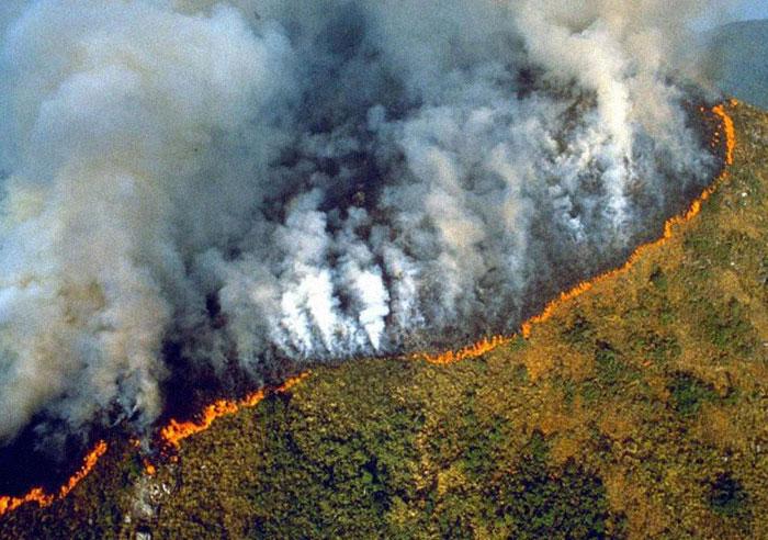 Le président brésilien tente délibérément de détruire la forêt amazonienne, selon une fuite de documents
