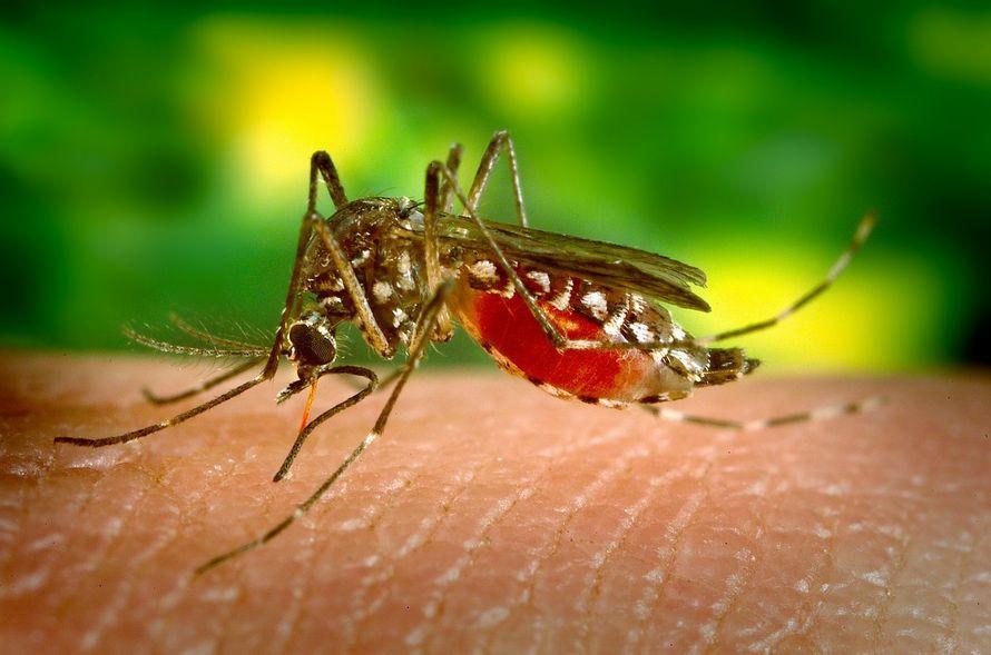 Un défenseur des animaux exhorte les gens à laisser les moustiques boire leur sang