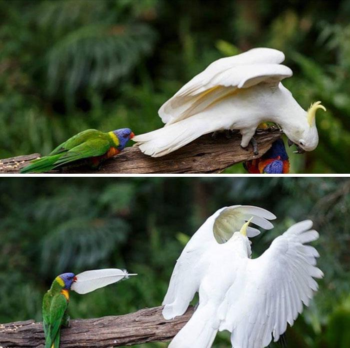 22 fois où des oiseaux ont tellement agi en cons que les gens ont dû leur faire honte sur Internet