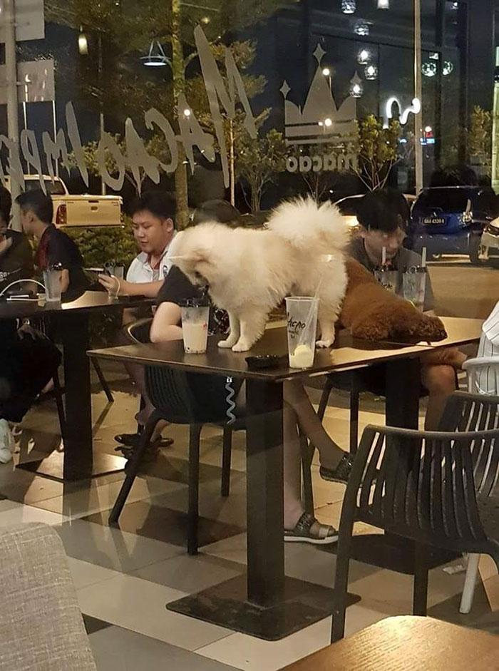 22 enfoirés qui ne méritent pas leurs animaux de compagnie