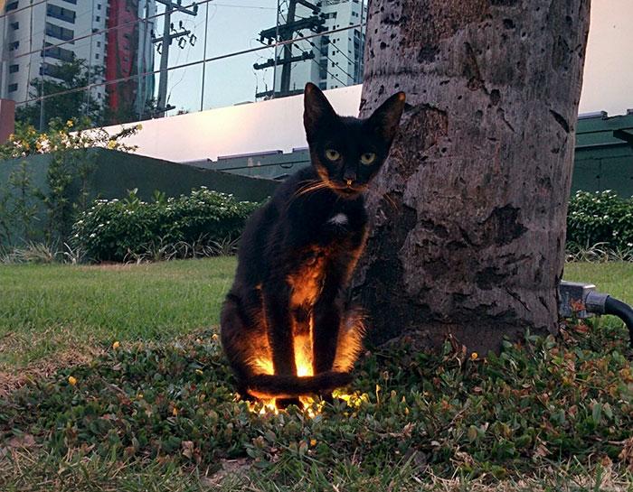 Des gens publient des photos d'animaux avec une aura menaçante et voici les 34 meilleures images