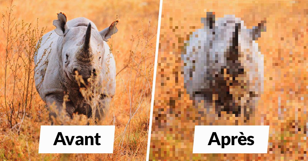 22 images qui sont composées d'autant de pixels qu'il y a d'animaux toujours en vie dans ces espèces